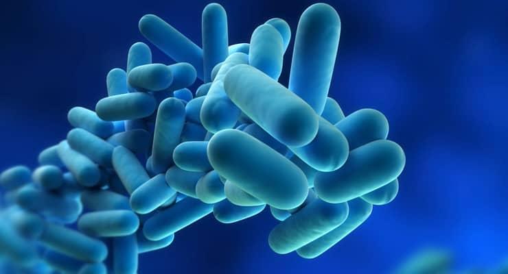 The legionella bacteria through a microscope - Legionella Risk Assessment