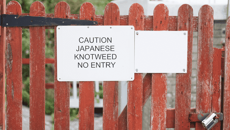 Sign on a locked garden gate saying, Caution, Japanese Knotweed, No Entry