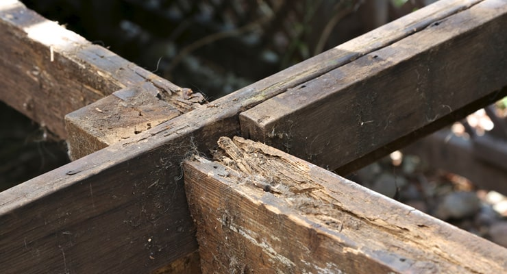 Timber, Dry Rot