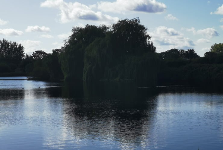 Trees photographed across a lake. Photograph taken at Admiral's Walk in Hoddesdon.